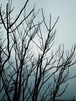 """明石家さんま「絶対に男がいない」バツイチ住吉美紀アナの""""枯れた私生活""""をバッサリ!"""