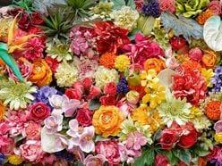 大林宣彦監督のSMAP『世界に一つだけの花』にまつわるエピソードに、稲垣吾郎も感動