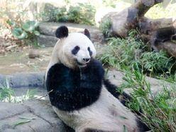 """上野動物園、繁殖成功以外の""""日本初""""とは?【雑学クイズ】"""