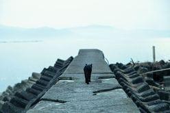 """月9『カインとアベル』爆死の理由は""""無理な設定""""?「山田涼介と倉科カナが恋人に見えない」"""