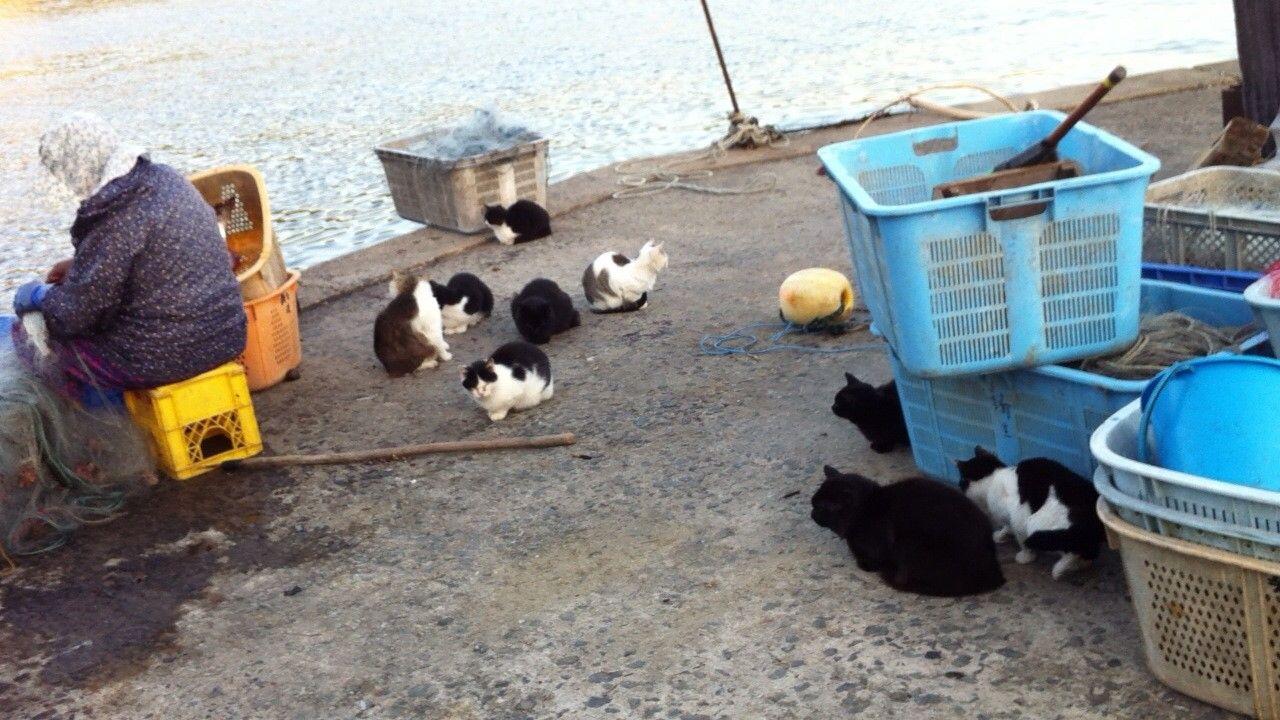 街角の猫ちゃんモフキュン写真館【みんなといっしょ編】の画像005