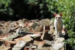TOKIO城島茂「ベテランらしからぬ」チャレンジ精神