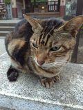 街角の猫ちゃんモフキュン写真館【近づいてみました編】の画像008
