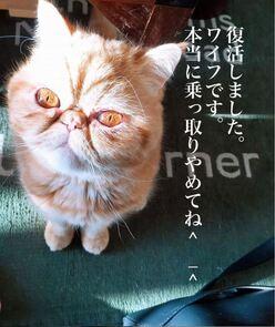 とろサーモン久保田、「悪キャラ」崩壊危機!!「超癒し系愛猫」に募金も発覚!