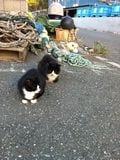 街角の猫ちゃんモフキュン写真館【みんなといっしょ編】の画像001