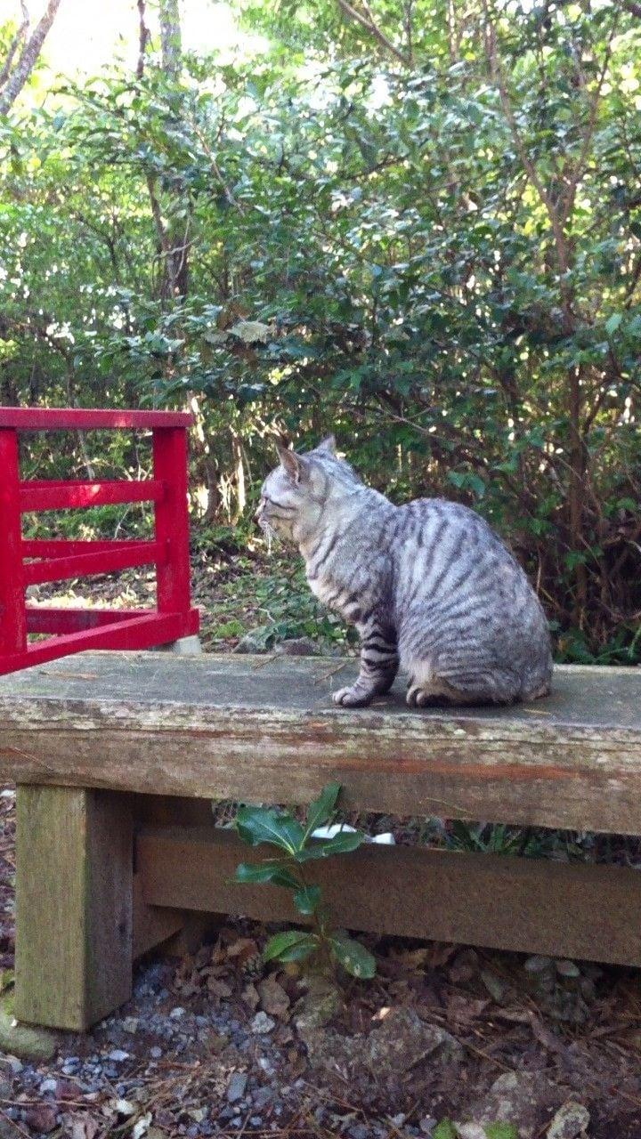 街角の猫ちゃんモフキュン写真館【ぼっち編】の画像005