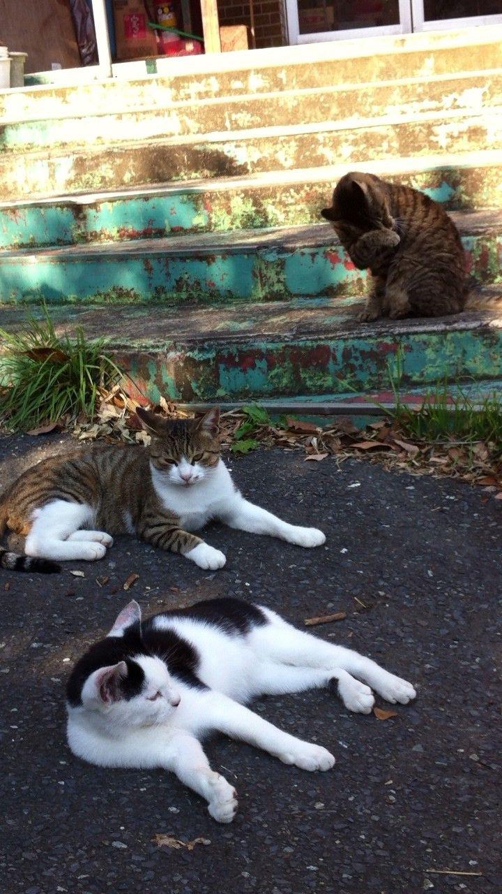 街角の猫ちゃんモフキュン写真館【みんなといっしょ編】の画像008