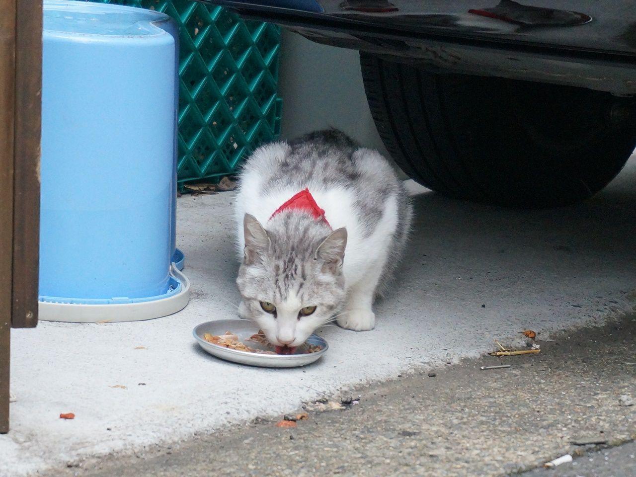 猫好き大集合! 街角ネコ歩き 強運キャットが登場だニャ~の画像005