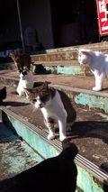 街角の猫ちゃんモフキュン写真館【みんなといっしょ編】の画像012