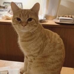 キンプリメンバーに似ているとの声も! 石田ゆり子の愛猫があの国民的歌手にそっくりと話題に