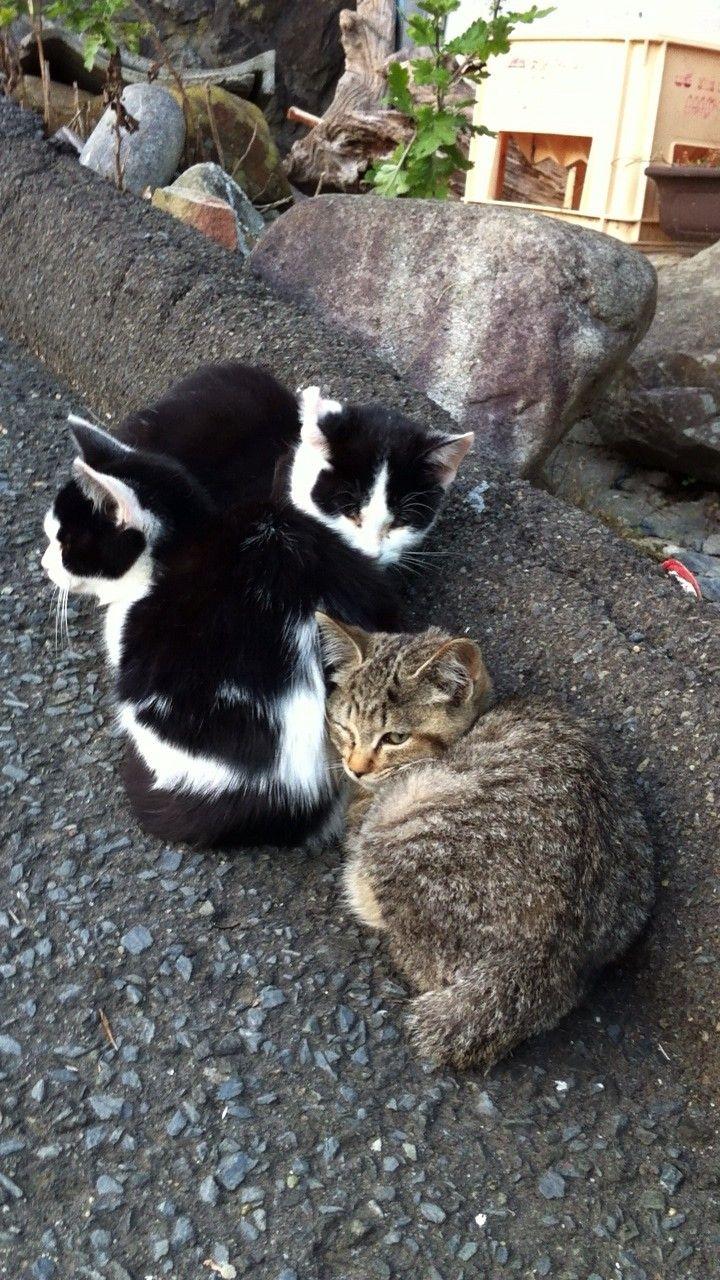 街角の猫ちゃんモフキュン写真館【みんなといっしょ編】の画像004