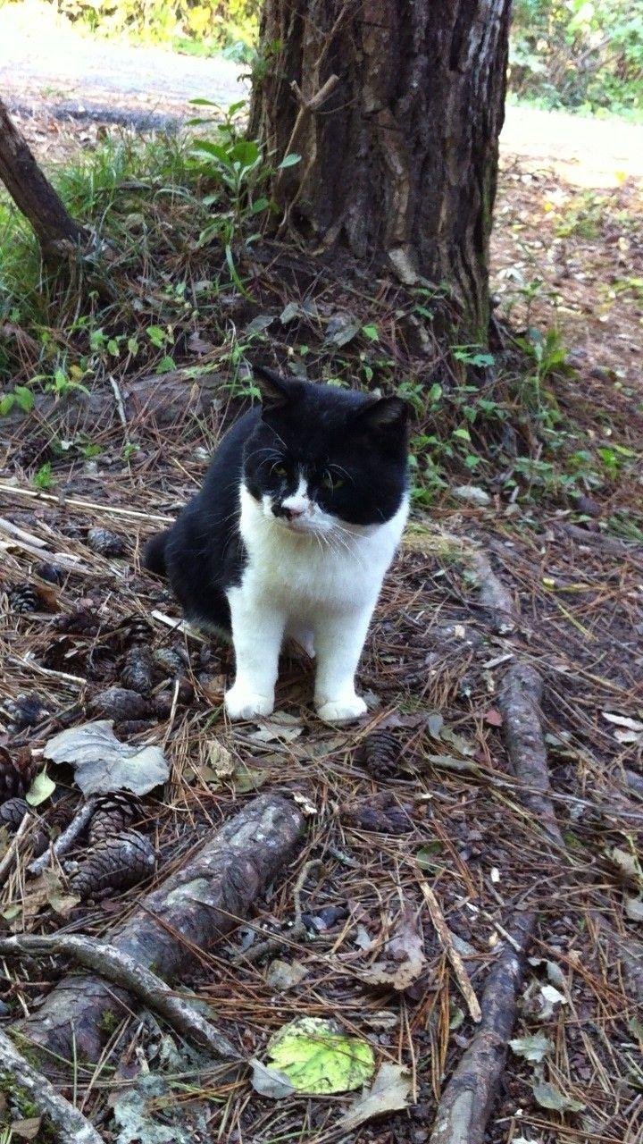 街角の猫ちゃんモフキュン写真館【ぼっち編】の画像006