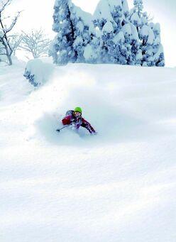 シャルマン火打|国内最大級の積雪を誇り 「非圧雪主義」を掲げるスキー場|新潟