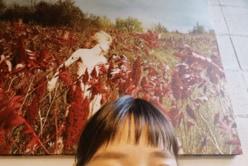 """吉谷彩子、オン眉前髪で""""イメチェン匂わせ""""に反響「絶対かわいいやつ」"""