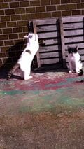 街角の猫ちゃんモフキュン写真館【みんなといっしょ編】の画像006