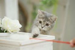 【動画】飼い主の指をねらう子猫が「可愛すぎる」と話題に