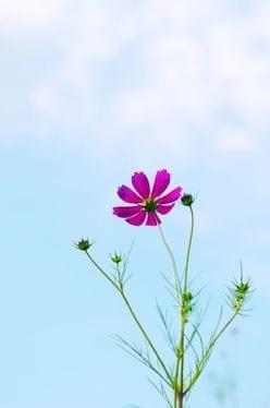 SMAP『世界に一つだけの花』購買運動で、「25年越しの雪辱」がついに果たされる?