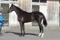POGファン大注目の2歳馬は本物か⁉【POGの王道新馬予想】