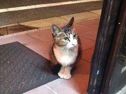 街角の猫ちゃんモフキュン写真館【ぼっち編】