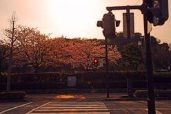 ジャニー喜多川が唯一スカウトしたという「信号待ちの美少年」とは?