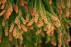 花粉の季節の必需品「ローションティッシュ」を安く手作りしちゃおう!