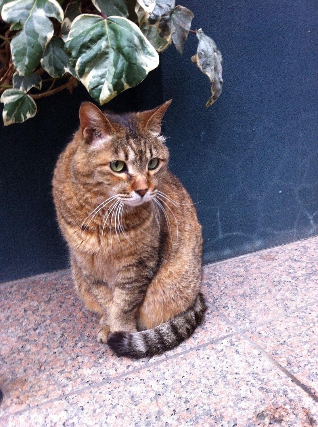 街角の猫ちゃんモフキュン写真館【ぼっち編】の画像001