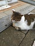 街角の猫ちゃんモフキュン写真館【近づいてみました編】の画像007