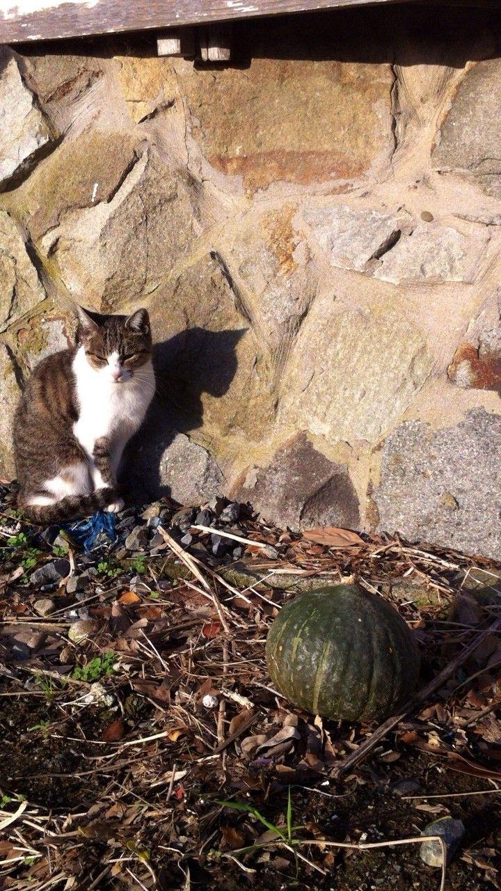 街角の猫ちゃんモフキュン写真館【ぼっち編】の画像004