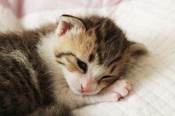 中居正広「これ痛い話?」坂本美雨の猫好きエピソードにウンザリ顔