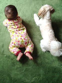 【動画】赤ちゃんのお世話をするワンコにほっこり!