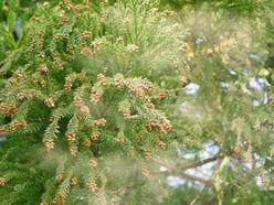 花粉症、知って得する「最新治療」 納豆&ヨーグルトが◎!