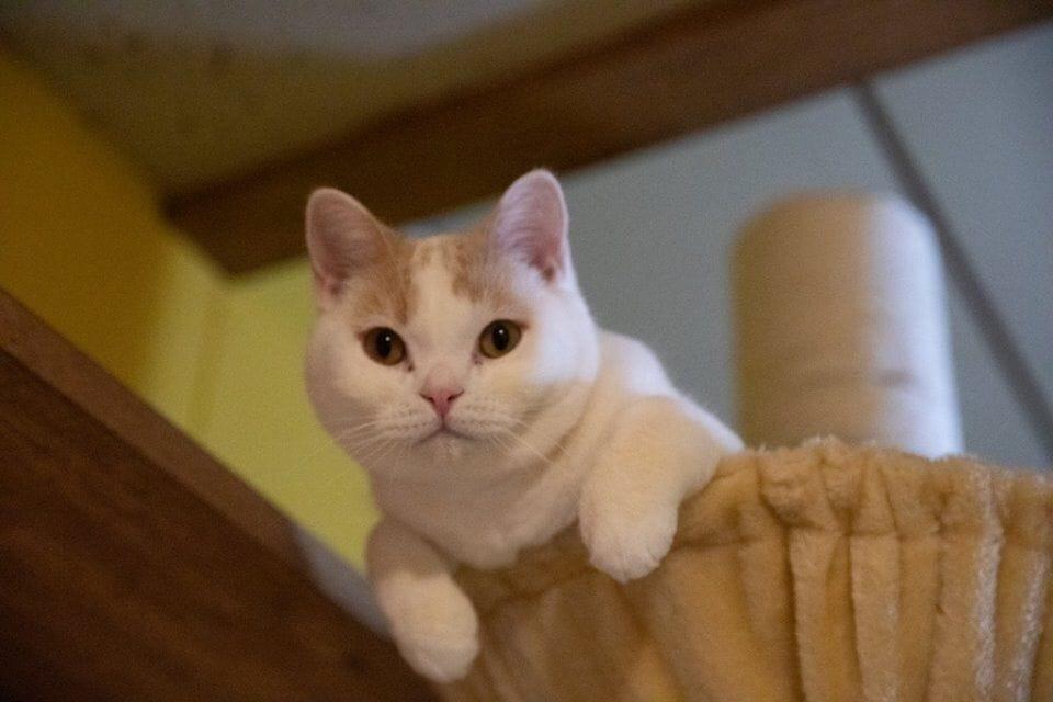 「ねこまつり」やるってよ! 限定猫スイーツや猫の御朱印も【画像10枚】の画像001