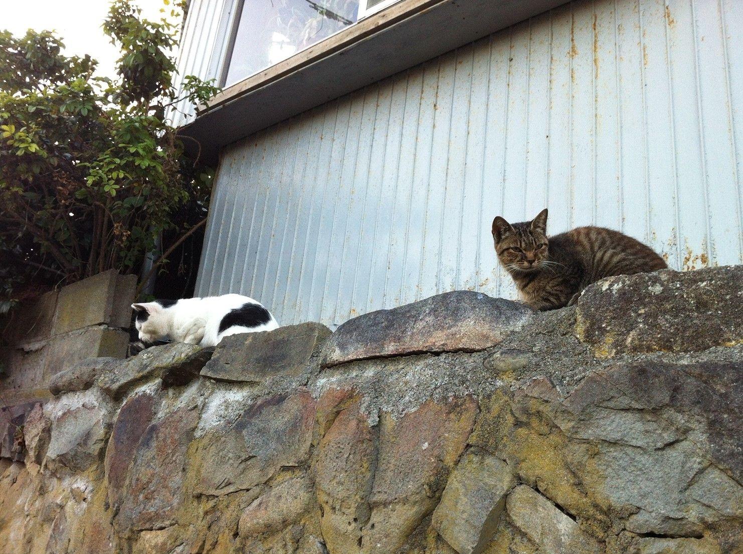 街角の猫ちゃんモフキュン写真館【みんなといっしょ編】の画像003