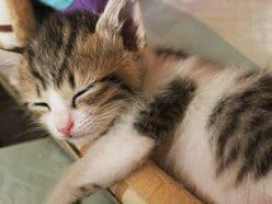 睡眠不足で心筋梗塞、脳卒中、鬱病の危険も!?  グッスリ眠れる「冬の快眠術」