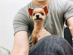 「アルパカみたい」水嶋ヒロ&絢香夫妻の愛犬が、大胆イメチェン!?
