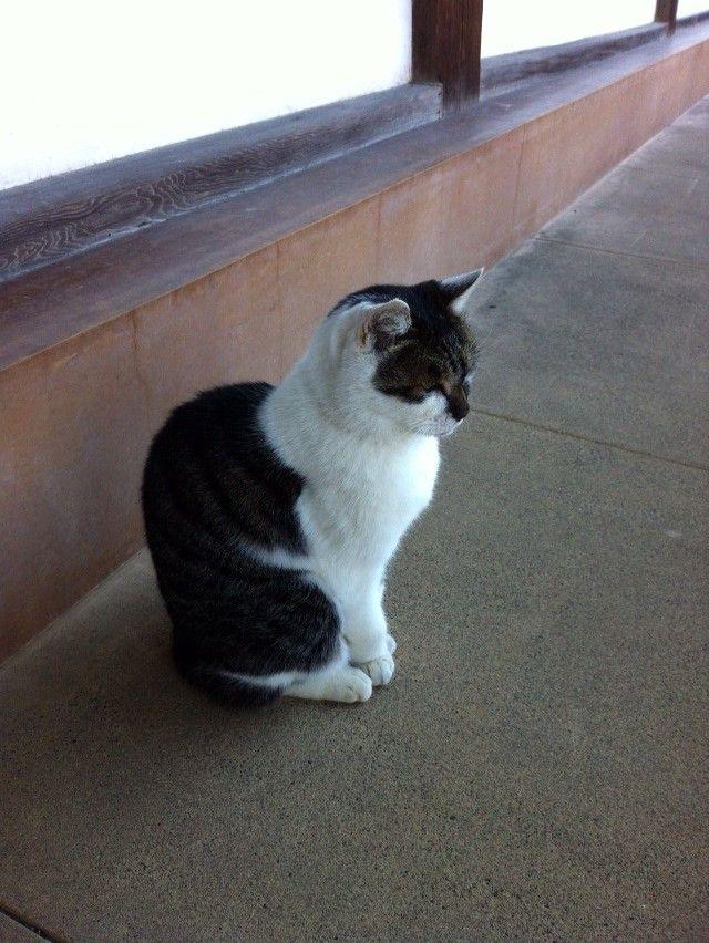 街角の猫ちゃんモフキュン写真館【ぼっち編】の画像002