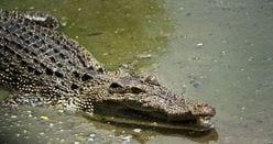 『クレイジージャーニー』爬虫類ハンターの奇行に、松本人志も驚嘆