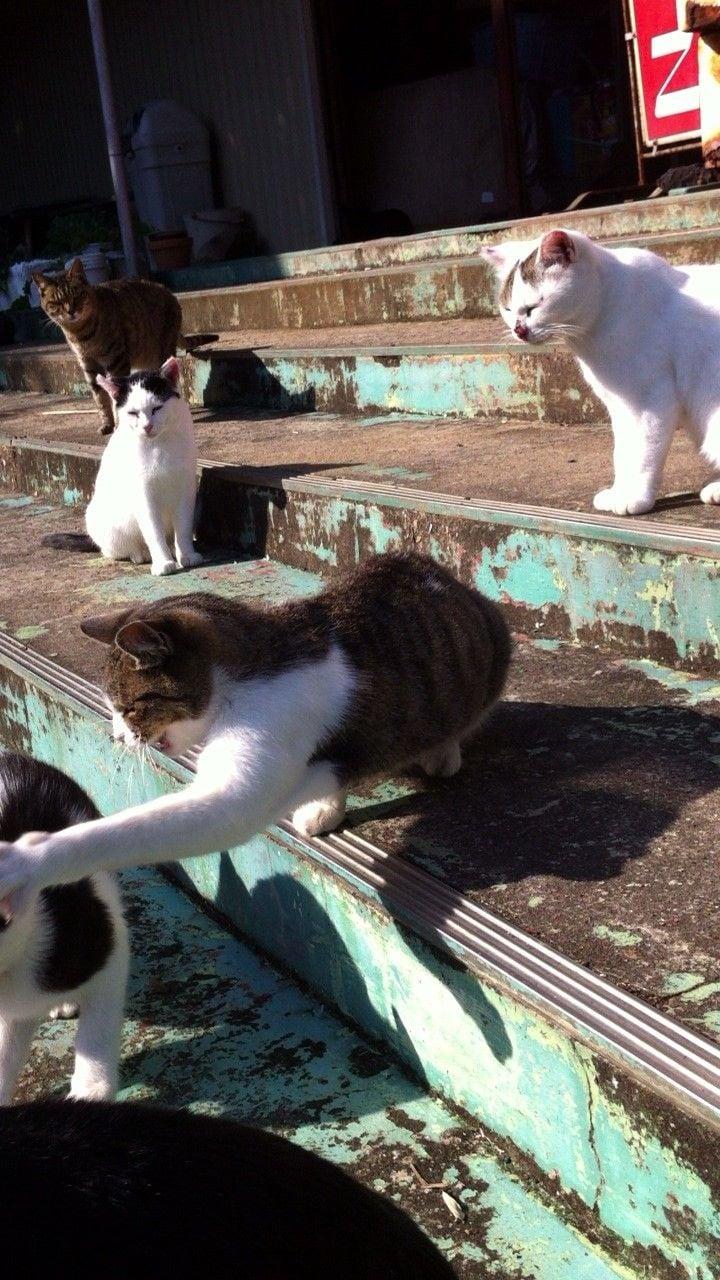 街角の猫ちゃんモフキュン写真館【みんなといっしょ編】の画像013