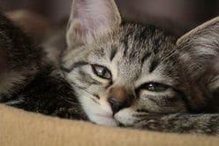 【動画】眠たすぎて「固まる猫」が可愛すぎる!