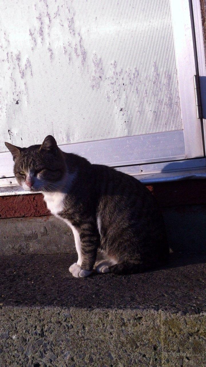 街角の猫ちゃんモフキュン写真館【ぼっち編】の画像003