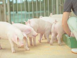 『鉄腕ダッシュ』ついに畜産業へ進出!? TOKIOの動向に注目集まる