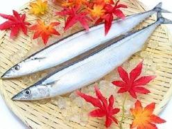 サンマにサケも不漁…日本から「魚がいなくなる日」