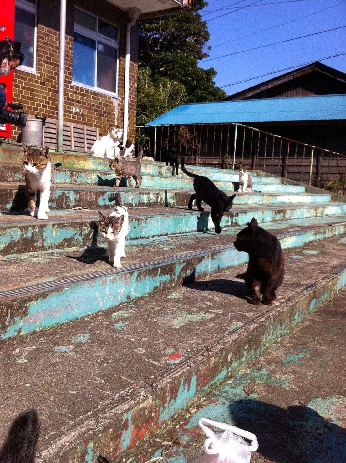 街角の猫ちゃんモフキュン写真館【みんなといっしょ編】の画像009