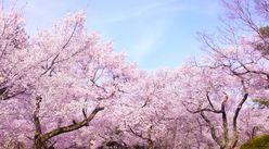 岡本夏生「お花見が大嫌い」発言に、ふかわりょうが困惑