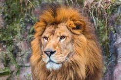"""タカトシのタカは、あの""""ライオン""""マークで荒稼ぎしていた!?"""