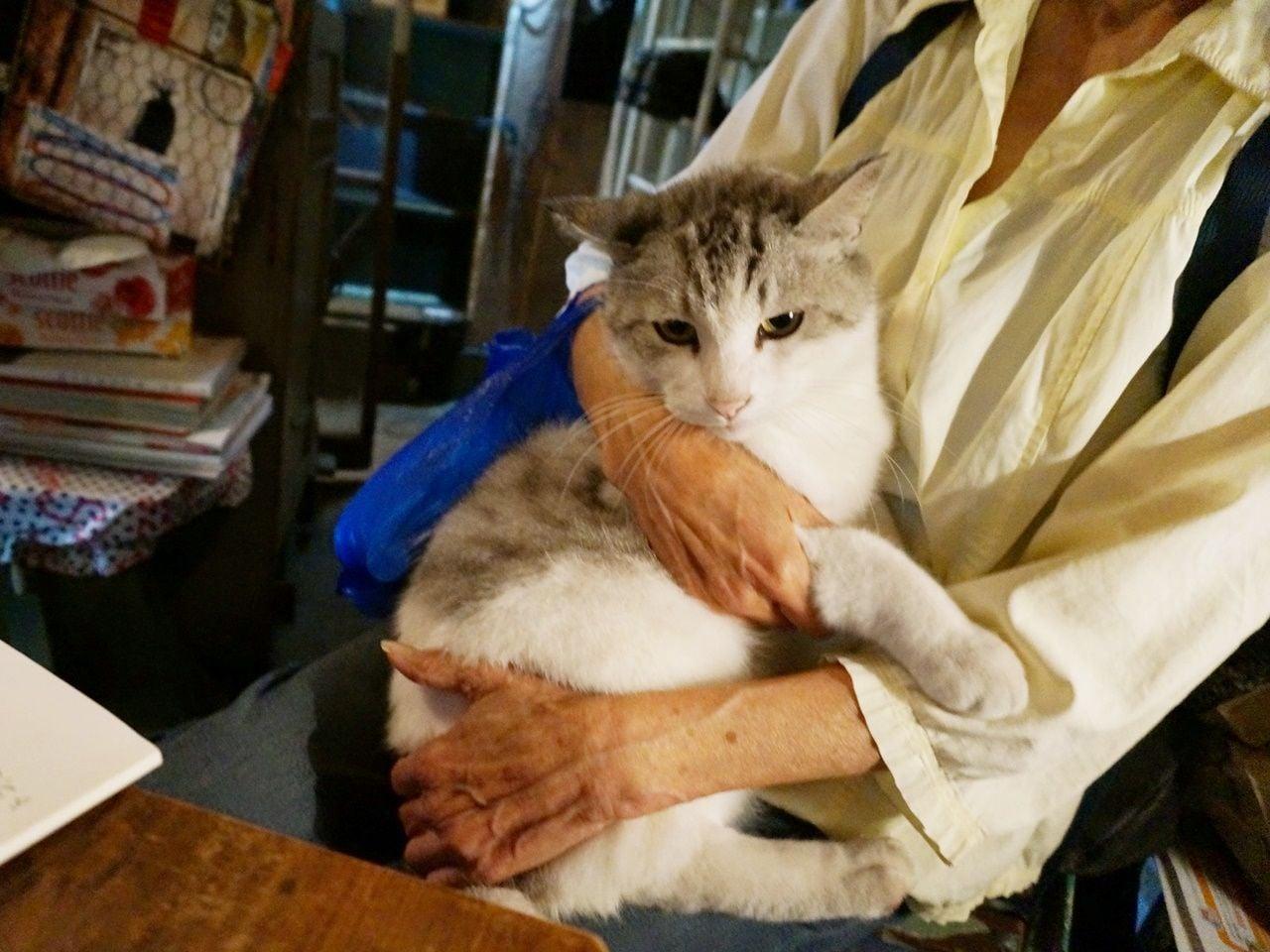 猫好き大集合! 街角ネコ歩き 強運キャットが登場だニャ~の画像001
