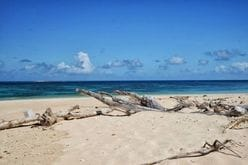 ラブカ、反射炉、城島茂ヌルヌル…『鉄腕ダッシュ』2017年の事件簿