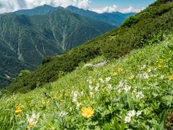秘境のお花畑! 花の百名山 中央アルプス、三ノ沢岳