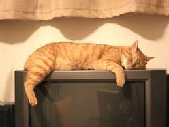 石破茂氏の映像で「猫が興奮する」都市伝説の真相とは