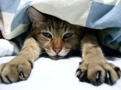 誰もが当たり前のようにとっている睡眠、実は「眠り方」は学習するものだった!?【快眠外来】